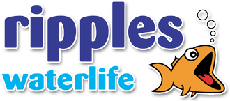 Ripples Waterlife Online